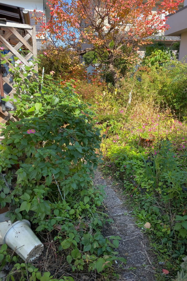 山椒 の 木 は 自宅 の 敷地 に 植え たら ダメ